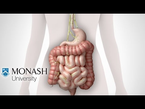IBS symptoms, the low FODMAP diet and the Monash app that can help